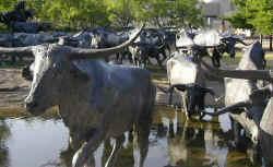 Dallas Pioneer Plaza Cattle Drive